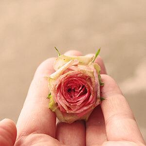 rose-hand-warm-sq
